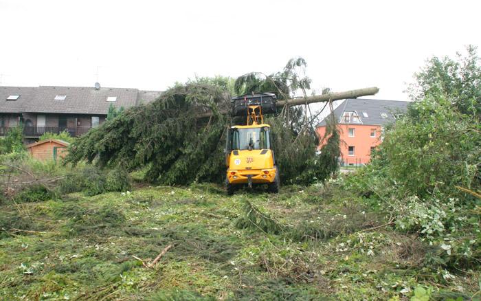 Baumarbeiten - Baumfällungen, Neupflanzungen und Aufforstung